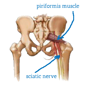 How improving the movement of your piriformis can help