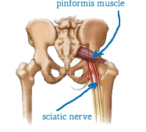 sciatic nerve diagram